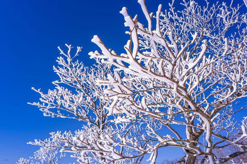 青空と樹氷(横サイズ)