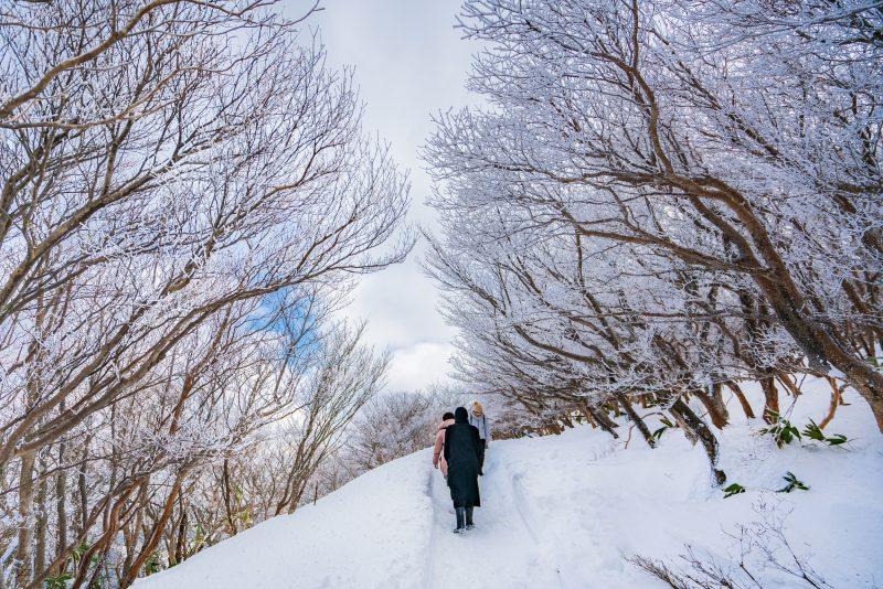 樹氷ロード