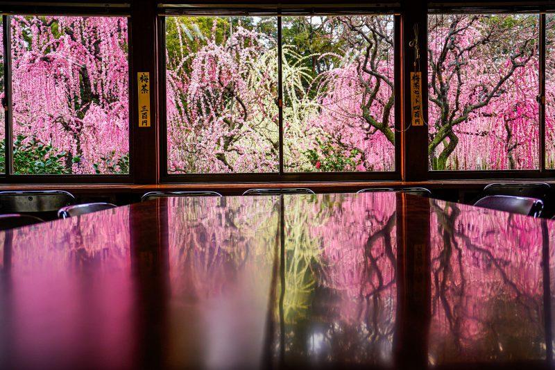 結城神社の梅リフレクション